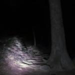 【九州の山の怪】夜の山で1人、どこからか人の話し声が聞こえる「誰かいるんですかー」→声の方に行くとゾッとした
